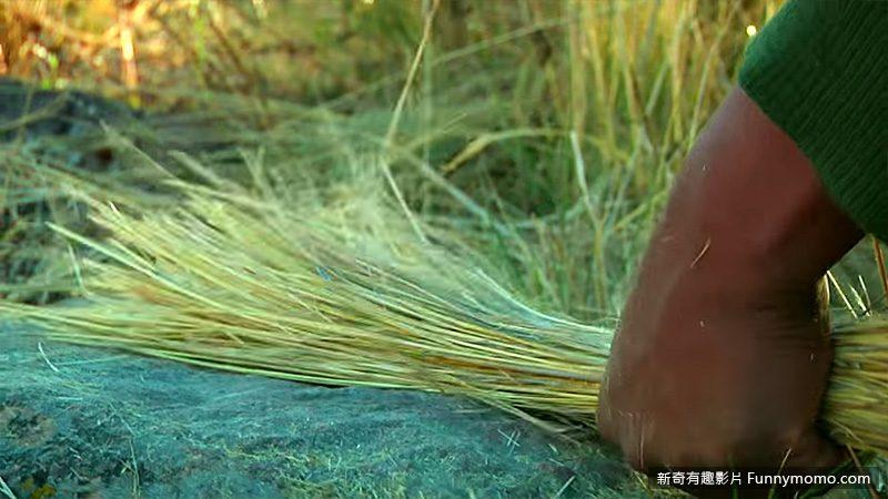 橋身使用的材料是當地的野草